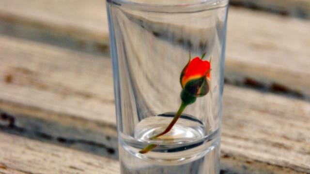 Alkohol i róża1
